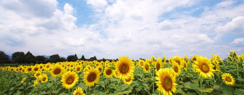 allergy-relief-treatment